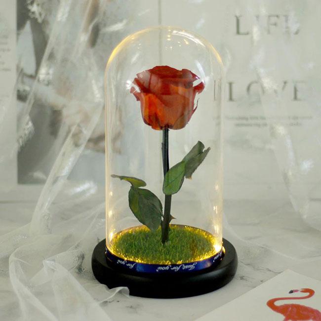 vecna-estestvena-roza-v-stiklenica-1