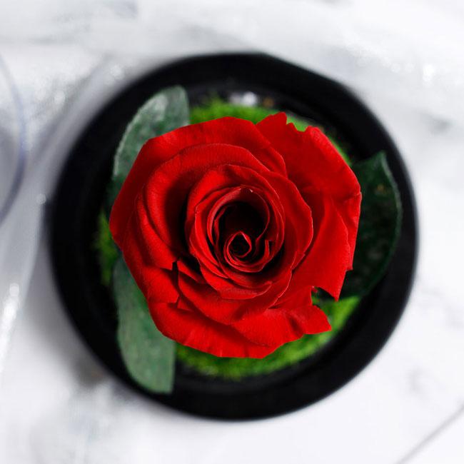 vecna-estestvena-roza-v-stiklenica-3