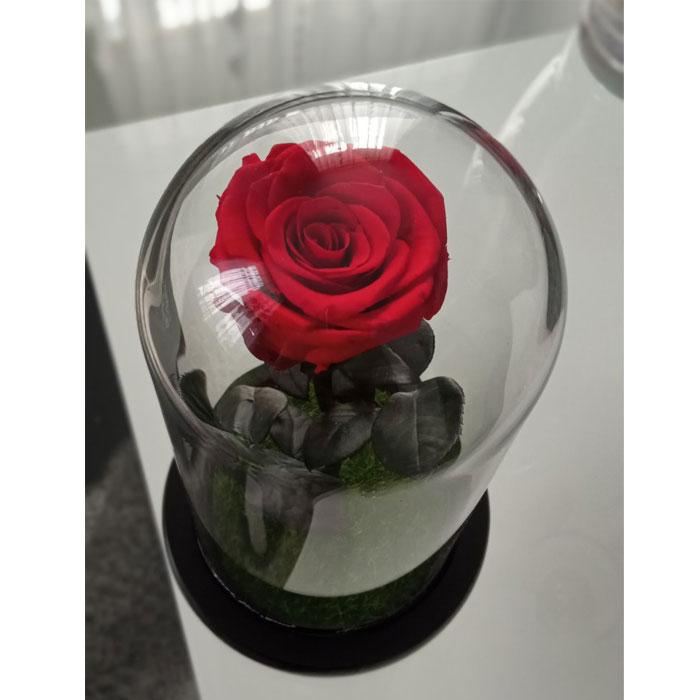 vecna-estestvena-roza-v-stiklenica-7