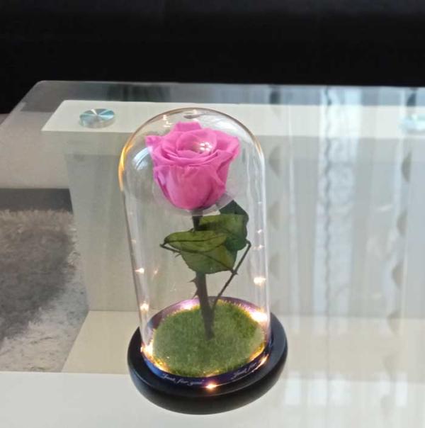vecna-estestvena-roza-v-stiklenica-rozova