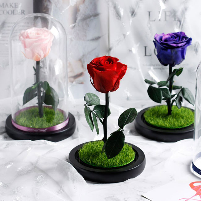 vecna-estestvena-roza-v-stiklenica