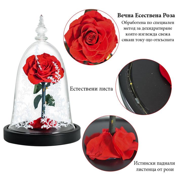 vecna-roza-v-staklenica-11