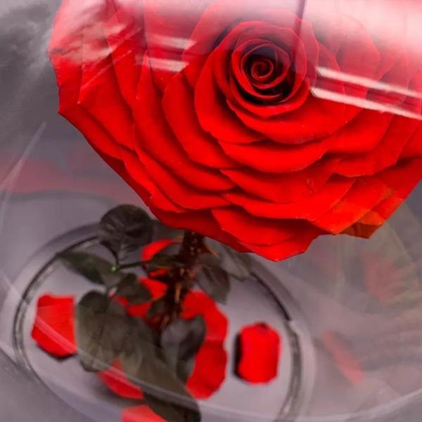 vecna-roza-v-stiklenica-s-podaricna-kutiq-1