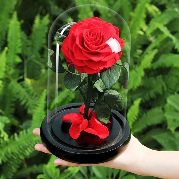 vecna-roza-v-stiklenica-s-podaricna-kutiq-9