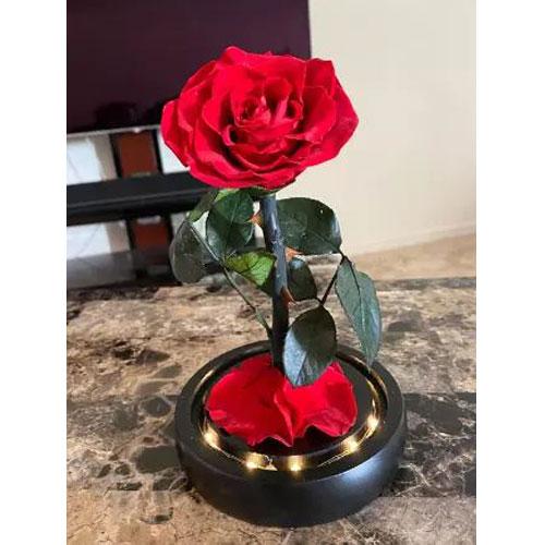 vecna-roza-v-stiklenica-s-podaricna-kutiq-cervena-s-led-svetlina-3