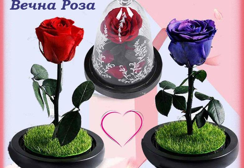 Вечна роза и роза в стъкленица