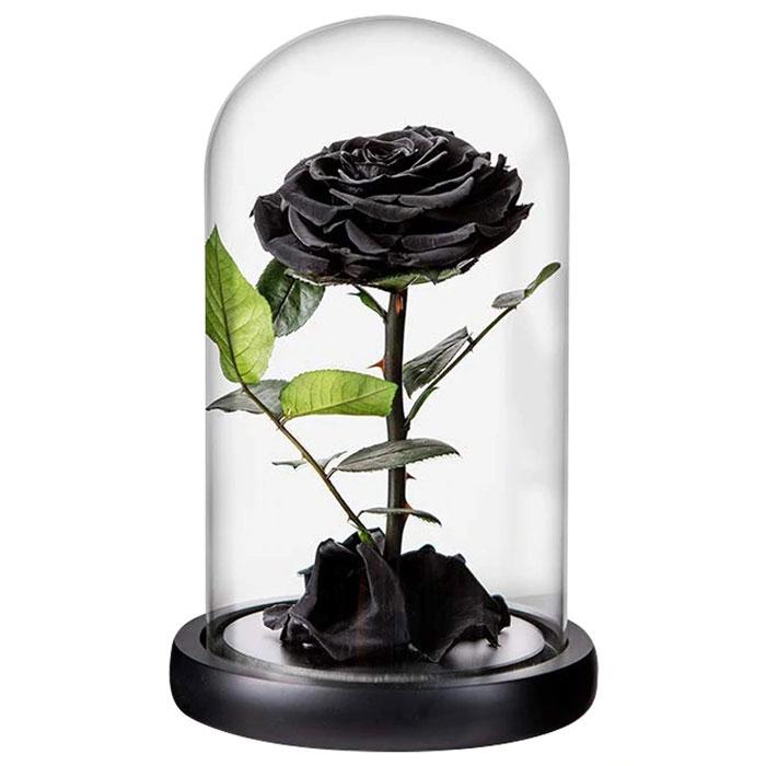 cherna-roza-v-stiklenica-5