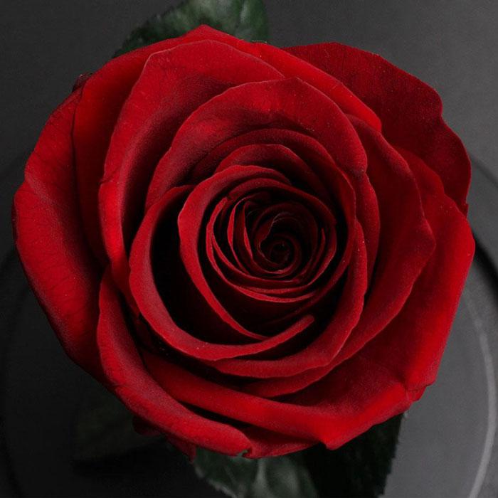 istinska-roza-v-stiklenica-1