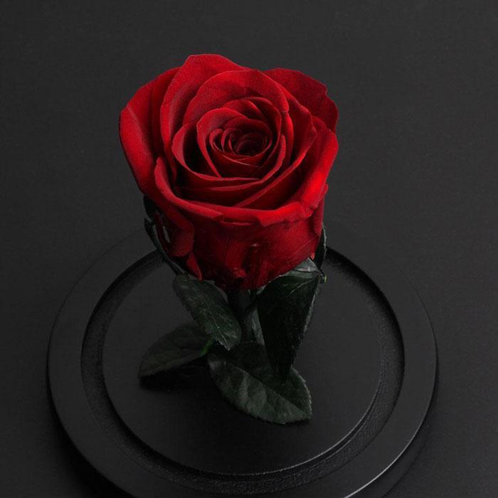 istinska-roza-v-stiklenica-2