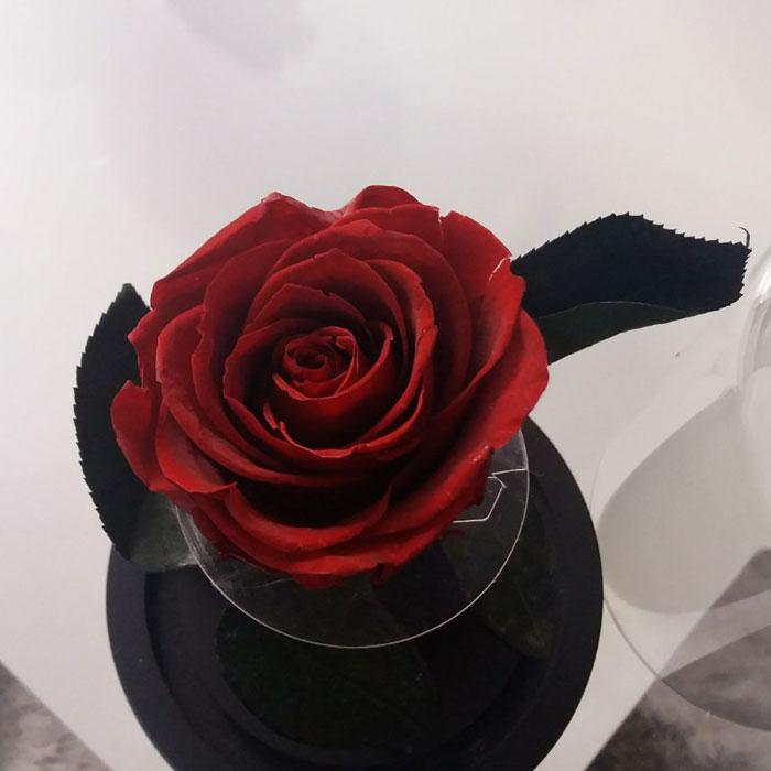 istinska-roza-v-stiklenica-8