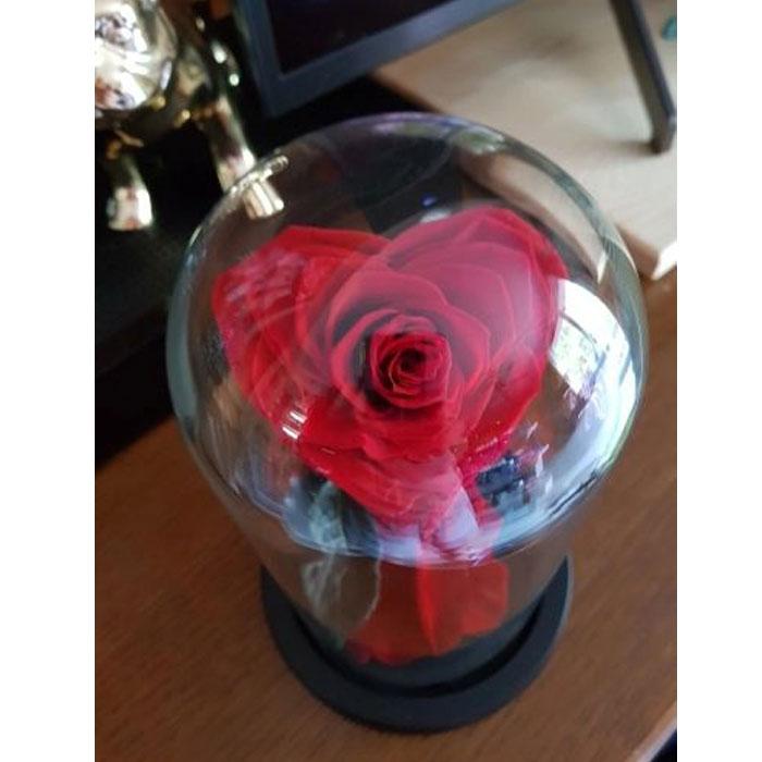 vecna-estestvena-roza-s-forma-na-sarce-6