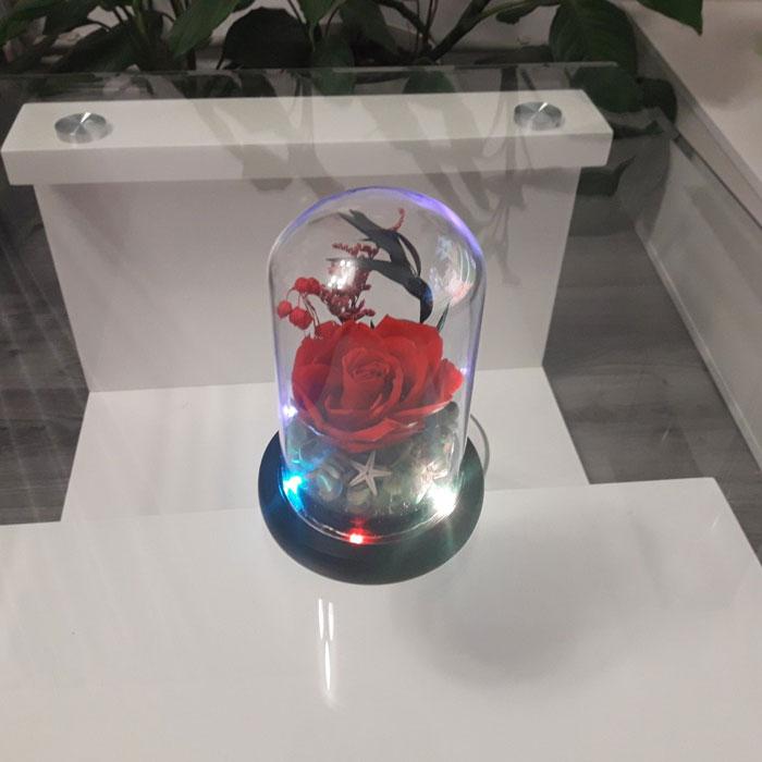 vecna-roza-v-staklenica-estestvena-s-led-svetlina-11