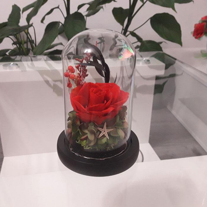 vecna-roza-v-staklenica-estestvena-s-led-svetlina-13